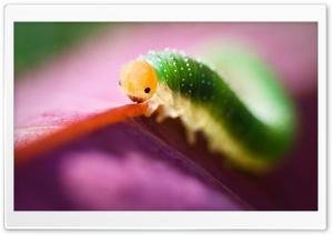 Cute Caterpillar Ultra HD Wallpaper for 4K UHD Widescreen desktop, tablet & smartphone