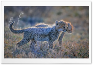 Cute Cheetah Cubs Ultra HD Wallpaper for 4K UHD Widescreen desktop, tablet & smartphone