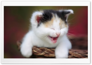 Cute Crying Kitty HD Wide Wallpaper for 4K UHD Widescreen desktop & smartphone