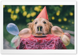 Cute Dog Birthday Ultra HD Wallpaper for 4K UHD Widescreen desktop, tablet & smartphone