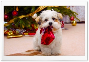 Cute Dog Christmas HD Wide Wallpaper for Widescreen