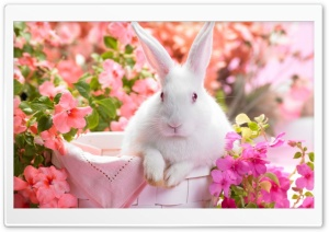 Cute Easter Bunny HD Wide Wallpaper for Widescreen