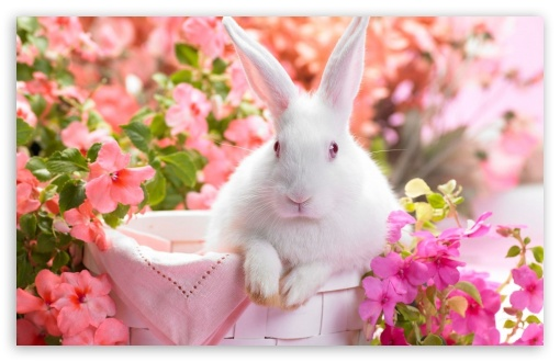 Cute Easter Bunny ❤ 4K UHD Wallpaper for Wide 16:10 5:3 Widescreen WHXGA WQXGA WUXGA WXGA WGA ; 4K UHD 16:9 Ultra High Definition 2160p 1440p 1080p 900p 720p ; Standard 4:3 5:4 3:2 Fullscreen UXGA XGA SVGA QSXGA SXGA DVGA HVGA HQVGA ( Apple PowerBook G4 iPhone 4 3G 3GS iPod Touch ) ; Tablet 1:1 ; iPad 1/2/Mini ; Mobile 4:3 5:3 3:2 16:9 5:4 - UXGA XGA SVGA WGA DVGA HVGA HQVGA ( Apple PowerBook G4 iPhone 4 3G 3GS iPod Touch ) 2160p 1440p 1080p 900p 720p QSXGA SXGA ;