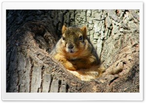 Cute Fat Squirrel HD Wide Wallpaper for Widescreen
