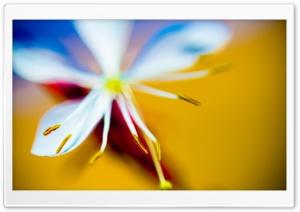 Cute Flower HD Wide Wallpaper for Widescreen
