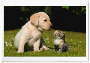 Cute Friendship HD Wide Wallpaper for Widescreen