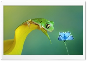Cute Frog HD Wide Wallpaper for Widescreen