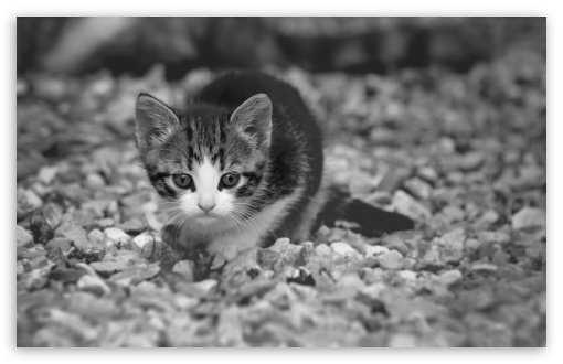 Cute Kitten ❤ 4K UHD Wallpaper for Wide 16:10 5:3 Widescreen WHXGA WQXGA WUXGA WXGA WGA ; 4K UHD 16:9 Ultra High Definition 2160p 1440p 1080p 900p 720p ; Standard 4:3 5:4 3:2 Fullscreen UXGA XGA SVGA QSXGA SXGA DVGA HVGA HQVGA ( Apple PowerBook G4 iPhone 4 3G 3GS iPod Touch ) ; Tablet 1:1 ; iPad 1/2/Mini ; Mobile 4:3 5:3 3:2 16:9 5:4 - UXGA XGA SVGA WGA DVGA HVGA HQVGA ( Apple PowerBook G4 iPhone 4 3G 3GS iPod Touch ) 2160p 1440p 1080p 900p 720p QSXGA SXGA ;