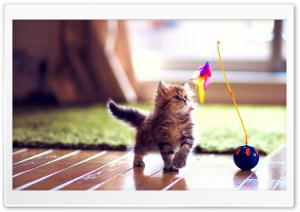 Cute Kitten Playing HD Wide Wallpaper for Widescreen