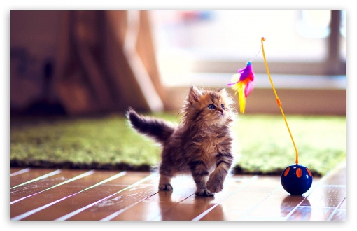 Cute Kitten Playing HD wallpaper for Wide 16:10 5:3 Widescreen WHXGA WQXGA WUXGA WXGA WGA ; HD 16:9 High Definition WQHD QWXGA 1080p 900p 720p QHD nHD ; Standard 4:3 5:4 3:2 Fullscreen UXGA XGA SVGA QSXGA SXGA DVGA HVGA HQVGA devices ( Apple PowerBook G4 iPhone 4 3G 3GS iPod Touch ) ; Tablet 1:1 ; iPad 1/2/Mini ; Mobile 4:3 5:3 3:2 16:9 5:4 - UXGA XGA SVGA WGA DVGA HVGA HQVGA devices ( Apple PowerBook G4 iPhone 4 3G 3GS iPod Touch ) WQHD QWXGA 1080p 900p 720p QHD nHD QSXGA SXGA ;