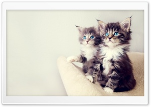 Cute Kittens Ultra HD Wallpaper for 4K UHD Widescreen desktop, tablet & smartphone