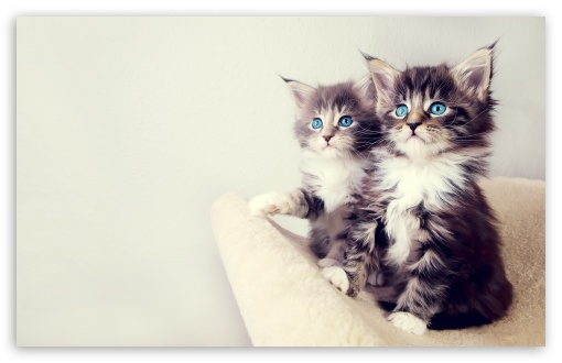 Cute Kittens HD wallpaper for Wide 16:10 5:3 Widescreen WHXGA WQXGA WUXGA WXGA WGA ; HD 16:9 High Definition WQHD QWXGA 1080p 900p 720p QHD nHD ; Standard 4:3 5:4 3:2 Fullscreen UXGA XGA SVGA QSXGA SXGA DVGA HVGA HQVGA devices ( Apple PowerBook G4 iPhone 4 3G 3GS iPod Touch ) ; Tablet 1:1 ; iPad 1/2/Mini ; Mobile 4:3 5:3 3:2 16:9 5:4 - UXGA XGA SVGA WGA DVGA HVGA HQVGA devices ( Apple PowerBook G4 iPhone 4 3G 3GS iPod Touch ) WQHD QWXGA 1080p 900p 720p QHD nHD QSXGA SXGA ;