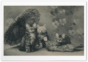 Cute Kittens Vintage HD Wide Wallpaper for Widescreen