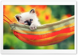 Cute Kitty Ultra HD Wallpaper for 4K UHD Widescreen desktop, tablet & smartphone