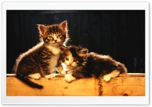 Cute Newborn Kittens HD Wide Wallpaper for Widescreen