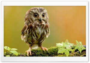 Cute Owl HD Wide Wallpaper for Widescreen