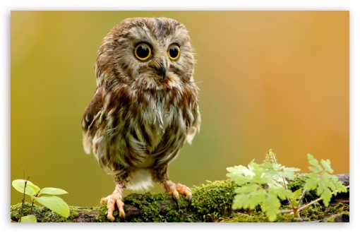 Cute Owl HD wallpaper for Wide 16:10 5:3 Widescreen WHXGA WQXGA WUXGA WXGA WGA ; HD 16:9 High Definition WQHD QWXGA 1080p 900p 720p QHD nHD ; Standard 4:3 5:4 3:2 Fullscreen UXGA XGA SVGA QSXGA SXGA DVGA HVGA HQVGA devices ( Apple PowerBook G4 iPhone 4 3G 3GS iPod Touch ) ; Tablet 1:1 ; iPad 1/2/Mini ; Mobile 4:3 5:3 3:2 16:9 5:4 - UXGA XGA SVGA WGA DVGA HVGA HQVGA devices ( Apple PowerBook G4 iPhone 4 3G 3GS iPod Touch ) WQHD QWXGA 1080p 900p 720p QHD nHD QSXGA SXGA ;