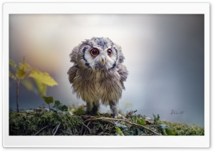 Cute Owlet Ultra HD Wallpaper for 4K UHD Widescreen desktop, tablet & smartphone