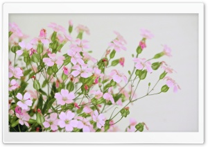 Cute Pink Flowers HD Wide Wallpaper for Widescreen
