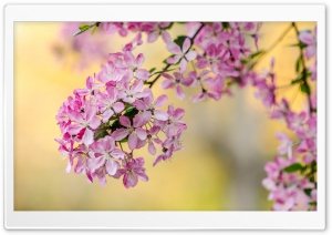 Cute Spring Tree Blossom HD Wide Wallpaper for Widescreen
