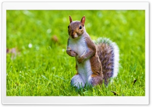 Cute Squirrel HD Wide Wallpaper for Widescreen