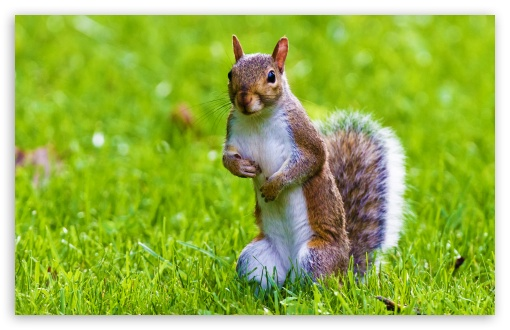 Cute Squirrel ❤ 4K UHD Wallpaper for Wide 16:10 5:3 Widescreen WHXGA WQXGA WUXGA WXGA WGA ; Standard 4:3 5:4 3:2 Fullscreen UXGA XGA SVGA QSXGA SXGA DVGA HVGA HQVGA ( Apple PowerBook G4 iPhone 4 3G 3GS iPod Touch ) ; Tablet 1:1 ; iPad 1/2/Mini ; Mobile 4:3 5:3 3:2 16:9 5:4 - UXGA XGA SVGA WGA DVGA HVGA HQVGA ( Apple PowerBook G4 iPhone 4 3G 3GS iPod Touch ) 2160p 1440p 1080p 900p 720p QSXGA SXGA ;