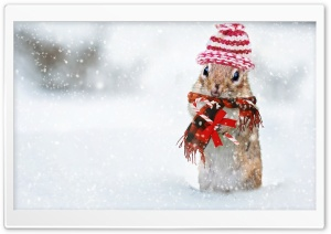 Cute Squirrel, Snowfall, Winter Holidays HD Wide Wallpaper for 4K UHD Widescreen desktop & smartphone