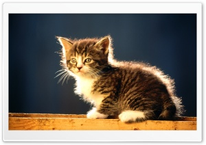 Cute Tabby Kitten HD Wide Wallpaper for 4K UHD Widescreen desktop & smartphone