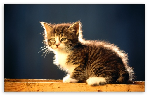 Cute Tabby Kitten HD wallpaper for Wide 16:10 5:3 Widescreen WHXGA WQXGA WUXGA WXGA WGA ; HD 16:9 High Definition WQHD QWXGA 1080p 900p 720p QHD nHD ; Standard 4:3 5:4 3:2 Fullscreen UXGA XGA SVGA QSXGA SXGA DVGA HVGA HQVGA devices ( Apple PowerBook G4 iPhone 4 3G 3GS iPod Touch ) ; iPad 1/2/Mini ; Mobile 4:3 5:3 3:2 16:9 5:4 - UXGA XGA SVGA WGA DVGA HVGA HQVGA devices ( Apple PowerBook G4 iPhone 4 3G 3GS iPod Touch ) WQHD QWXGA 1080p 900p 720p QHD nHD QSXGA SXGA ;