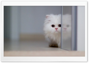 Cute White Cat HD Wide Wallpaper for Widescreen