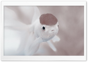Cute White Fish HD Wide Wallpaper for Widescreen
