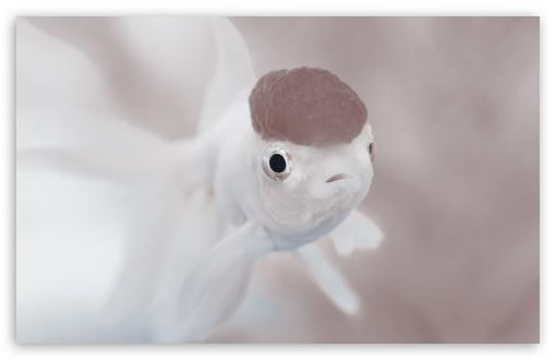 Cute White Fish ❤ 4K UHD Wallpaper for Wide 16:10 5:3 Widescreen WHXGA WQXGA WUXGA WXGA WGA ; UltraWide 21:9 24:10 ; 4K UHD 16:9 Ultra High Definition 2160p 1440p 1080p 900p 720p ; UHD 16:9 2160p 1440p 1080p 900p 720p ; Standard 4:3 5:4 3:2 Fullscreen UXGA XGA SVGA QSXGA SXGA DVGA HVGA HQVGA ( Apple PowerBook G4 iPhone 4 3G 3GS iPod Touch ) ; Smartphone 16:9 3:2 5:3 2160p 1440p 1080p 900p 720p DVGA HVGA HQVGA ( Apple PowerBook G4 iPhone 4 3G 3GS iPod Touch ) WGA ; Tablet 1:1 ; iPad 1/2/Mini ; Mobile 4:3 5:3 3:2 16:9 5:4 - UXGA XGA SVGA WGA DVGA HVGA HQVGA ( Apple PowerBook G4 iPhone 4 3G 3GS iPod Touch ) 2160p 1440p 1080p 900p 720p QSXGA SXGA ; Dual 16:10 5:3 16:9 4:3 5:4 3:2 WHXGA WQXGA WUXGA WXGA WGA 2160p 1440p 1080p 900p 720p UXGA XGA SVGA QSXGA SXGA DVGA HVGA HQVGA ( Apple PowerBook G4 iPhone 4 3G 3GS iPod Touch ) ;