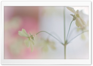 Cute White Flowers HD Wide Wallpaper for Widescreen