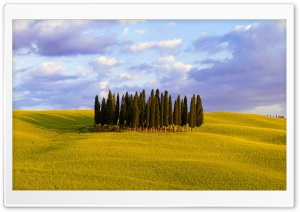 Cypress Trees HD Wide Wallpaper for Widescreen