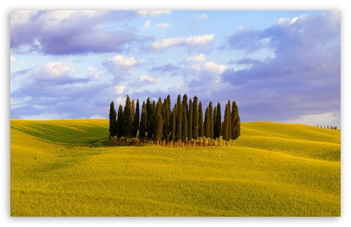 Cypress Trees ❤ 4K UHD Wallpaper for Wide 16:10 5:3 Widescreen WHXGA WQXGA WUXGA WXGA WGA ; 4K UHD 16:9 Ultra High Definition 2160p 1440p 1080p 900p 720p ; Standard 4:3 5:4 3:2 Fullscreen UXGA XGA SVGA QSXGA SXGA DVGA HVGA HQVGA ( Apple PowerBook G4 iPhone 4 3G 3GS iPod Touch ) ; Tablet 1:1 ; iPad 1/2/Mini ; Mobile 4:3 5:3 3:2 16:9 5:4 - UXGA XGA SVGA WGA DVGA HVGA HQVGA ( Apple PowerBook G4 iPhone 4 3G 3GS iPod Touch ) 2160p 1440p 1080p 900p 720p QSXGA SXGA ;