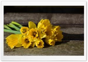 Daffodil Bouquet, Rustic Background Ultra HD Wallpaper for 4K UHD Widescreen desktop, tablet & smartphone