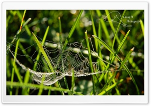 Dainty Spider Web HD Wide Wallpaper for Widescreen