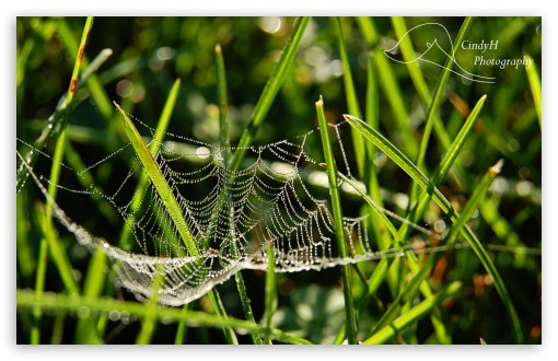 Dainty Spider Web HD wallpaper for Wide 16:10 5:3 Widescreen WHXGA WQXGA WUXGA WXGA WGA ; HD 16:9 High Definition WQHD QWXGA 1080p 900p 720p QHD nHD ; Standard 4:3 3:2 Fullscreen UXGA XGA SVGA DVGA HVGA HQVGA devices ( Apple PowerBook G4 iPhone 4 3G 3GS iPod Touch ) ; iPad 1/2/Mini ; Mobile 4:3 5:3 3:2 16:9 - UXGA XGA SVGA WGA DVGA HVGA HQVGA devices ( Apple PowerBook G4 iPhone 4 3G 3GS iPod Touch ) WQHD QWXGA 1080p 900p 720p QHD nHD ;