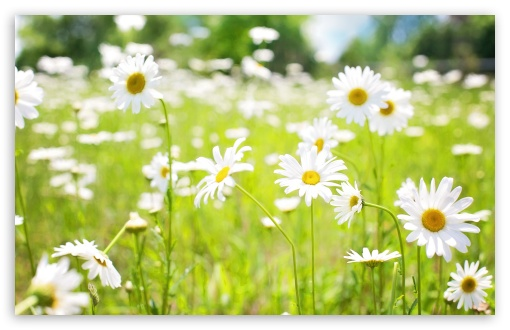 Daisies Field ❤ 4K UHD Wallpaper for Wide 16:10 5:3 Widescreen WHXGA WQXGA WUXGA WXGA WGA ; 4K UHD 16:9 Ultra High Definition 2160p 1440p 1080p 900p 720p ; UHD 16:9 2160p 1440p 1080p 900p 720p ; Standard 4:3 5:4 3:2 Fullscreen UXGA XGA SVGA QSXGA SXGA DVGA HVGA HQVGA ( Apple PowerBook G4 iPhone 4 3G 3GS iPod Touch ) ; Smartphone 5:3 WGA ; Tablet 1:1 ; iPad 1/2/Mini ; Mobile 4:3 5:3 3:2 16:9 5:4 - UXGA XGA SVGA WGA DVGA HVGA HQVGA ( Apple PowerBook G4 iPhone 4 3G 3GS iPod Touch ) 2160p 1440p 1080p 900p 720p QSXGA SXGA ; Dual 16:10 5:3 16:9 4:3 5:4 WHXGA WQXGA WUXGA WXGA WGA 2160p 1440p 1080p 900p 720p UXGA XGA SVGA QSXGA SXGA ;