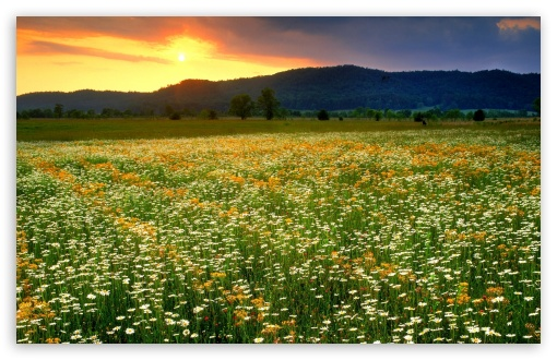 Daisies Field Landscape HD wallpaper for Wide 16:10 5:3 Widescreen WHXGA WQXGA WUXGA WXGA WGA ; HD 16:9 High Definition WQHD QWXGA 1080p 900p 720p QHD nHD ; Standard 4:3 5:4 3:2 Fullscreen UXGA XGA SVGA QSXGA SXGA DVGA HVGA HQVGA devices ( Apple PowerBook G4 iPhone 4 3G 3GS iPod Touch ) ; Tablet 1:1 ; iPad 1/2/Mini ; Mobile 4:3 5:3 3:2 16:9 5:4 - UXGA XGA SVGA WGA DVGA HVGA HQVGA devices ( Apple PowerBook G4 iPhone 4 3G 3GS iPod Touch ) WQHD QWXGA 1080p 900p 720p QHD nHD QSXGA SXGA ; Dual 16:10 5:3 16:9 4:3 WHXGA WQXGA WUXGA WXGA WGA WQHD QWXGA 1080p 900p 720p QHD nHD UXGA XGA SVGA ;