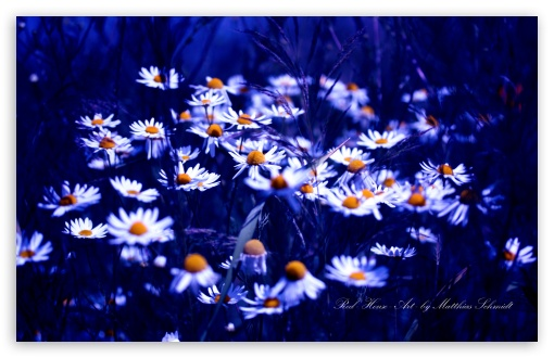 Daisies Group HD wallpaper for Wide 16:10 5:3 Widescreen WHXGA WQXGA WUXGA WXGA WGA ; HD 16:9 High Definition WQHD QWXGA 1080p 900p 720p QHD nHD ; UHD 16:9 WQHD QWXGA 1080p 900p 720p QHD nHD ; Standard 4:3 5:4 3:2 Fullscreen UXGA XGA SVGA QSXGA SXGA DVGA HVGA HQVGA devices ( Apple PowerBook G4 iPhone 4 3G 3GS iPod Touch ) ; Tablet 1:1 ; iPad 1/2/Mini ; Mobile 4:3 5:3 3:2 16:9 5:4 - UXGA XGA SVGA WGA DVGA HVGA HQVGA devices ( Apple PowerBook G4 iPhone 4 3G 3GS iPod Touch ) WQHD QWXGA 1080p 900p 720p QHD nHD QSXGA SXGA ; Dual 16:10 5:3 16:9 4:3 5:4 WHXGA WQXGA WUXGA WXGA WGA WQHD QWXGA 1080p 900p 720p QHD nHD UXGA XGA SVGA QSXGA SXGA ;