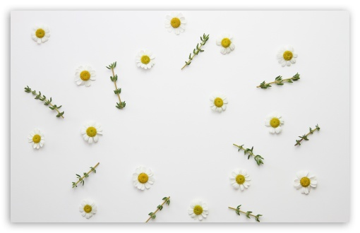 Daisy Flowers and Thyme Herb ❤ 4K UHD Wallpaper for Wide 16:10 5:3 Widescreen WHXGA WQXGA WUXGA WXGA WGA ; 4K UHD 16:9 Ultra High Definition 2160p 1440p 1080p 900p 720p ; UHD 16:9 2160p 1440p 1080p 900p 720p ; Standard 4:3 5:4 3:2 Fullscreen UXGA XGA SVGA QSXGA SXGA DVGA HVGA HQVGA ( Apple PowerBook G4 iPhone 4 3G 3GS iPod Touch ) ; Smartphone 16:9 3:2 5:3 2160p 1440p 1080p 900p 720p DVGA HVGA HQVGA ( Apple PowerBook G4 iPhone 4 3G 3GS iPod Touch ) WGA ; Tablet 1:1 ; iPad 1/2/Mini ; Mobile 4:3 5:3 3:2 16:9 5:4 - UXGA XGA SVGA WGA DVGA HVGA HQVGA ( Apple PowerBook G4 iPhone 4 3G 3GS iPod Touch ) 2160p 1440p 1080p 900p 720p QSXGA SXGA ; Dual 16:10 5:3 16:9 4:3 5:4 3:2 WHXGA WQXGA WUXGA WXGA WGA 2160p 1440p 1080p 900p 720p UXGA XGA SVGA QSXGA SXGA DVGA HVGA HQVGA ( Apple PowerBook G4 iPhone 4 3G 3GS iPod Touch ) ; Triple 16:10 5:3 16:9 4:3 5:4 3:2 WHXGA WQXGA WUXGA WXGA WGA 2160p 1440p 1080p 900p 720p UXGA XGA SVGA QSXGA SXGA DVGA HVGA HQVGA ( Apple PowerBook G4 iPhone 4 3G 3GS iPod Touch ) ;