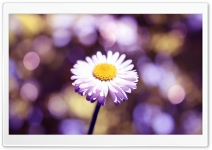 Daisy The Lights Close Up HD Wide Wallpaper for Widescreen