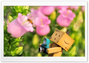 Danbo & Bee HD Wide Wallpaper for Widescreen