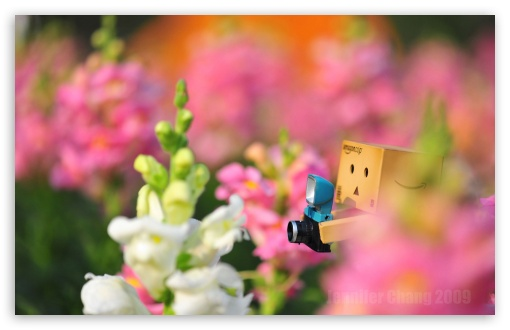 Danbo Lost In The Flower Sea... HD wallpaper for Wide 16:10 5:3 Widescreen WHXGA WQXGA WUXGA WXGA WGA ; HD 16:9 High Definition WQHD QWXGA 1080p 900p 720p QHD nHD ; Standard 4:3 5:4 3:2 Fullscreen UXGA XGA SVGA QSXGA SXGA DVGA HVGA HQVGA devices ( Apple PowerBook G4 iPhone 4 3G 3GS iPod Touch ) ; Tablet 1:1 ; iPad 1/2/Mini ; Mobile 4:3 5:3 3:2 16:9 5:4 - UXGA XGA SVGA WGA DVGA HVGA HQVGA devices ( Apple PowerBook G4 iPhone 4 3G 3GS iPod Touch ) WQHD QWXGA 1080p 900p 720p QHD nHD QSXGA SXGA ; Dual 4:3 5:4 UXGA XGA SVGA QSXGA SXGA ;