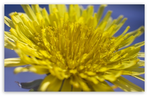 Dandelion ❤ 4K UHD Wallpaper for Wide 16:10 5:3 Widescreen WHXGA WQXGA WUXGA WXGA WGA ; 4K UHD 16:9 Ultra High Definition 2160p 1440p 1080p 900p 720p ; UHD 16:9 2160p 1440p 1080p 900p 720p ; Standard 4:3 5:4 3:2 Fullscreen UXGA XGA SVGA QSXGA SXGA DVGA HVGA HQVGA ( Apple PowerBook G4 iPhone 4 3G 3GS iPod Touch ) ; Smartphone 5:3 WGA ; Tablet 1:1 ; iPad 1/2/Mini ; Mobile 4:3 5:3 3:2 16:9 5:4 - UXGA XGA SVGA WGA DVGA HVGA HQVGA ( Apple PowerBook G4 iPhone 4 3G 3GS iPod Touch ) 2160p 1440p 1080p 900p 720p QSXGA SXGA ; Dual 16:10 5:3 4:3 5:4 WHXGA WQXGA WUXGA WXGA WGA UXGA XGA SVGA QSXGA SXGA ;