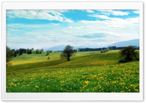 Dandelion Field HD Wide Wallpaper for Widescreen