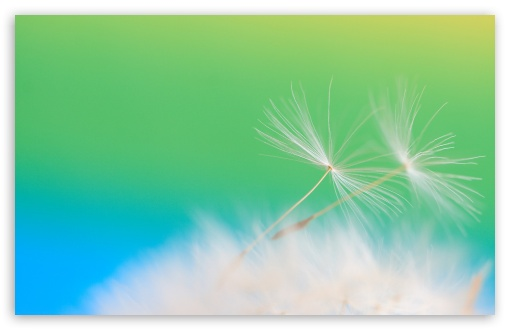 Dandelion Fluff HD wallpaper for Wide 16:10 5:3 Widescreen WHXGA WQXGA WUXGA WXGA WGA ; HD 16:9 High Definition WQHD QWXGA 1080p 900p 720p QHD nHD ; Standard 4:3 5:4 3:2 Fullscreen UXGA XGA SVGA QSXGA SXGA DVGA HVGA HQVGA devices ( Apple PowerBook G4 iPhone 4 3G 3GS iPod Touch ) ; Tablet 1:1 ; iPad 1/2/Mini ; Mobile 4:3 5:3 3:2 16:9 5:4 - UXGA XGA SVGA WGA DVGA HVGA HQVGA devices ( Apple PowerBook G4 iPhone 4 3G 3GS iPod Touch ) WQHD QWXGA 1080p 900p 720p QHD nHD QSXGA SXGA ;