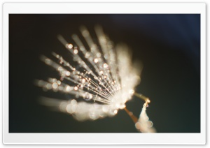 Dandelion Fluff Close up HD Wide Wallpaper for Widescreen