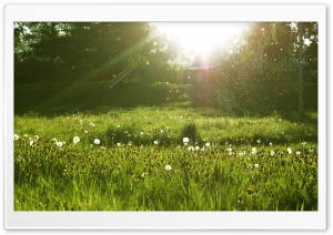 Dandelion Seeds - Make a Wish HD Wide Wallpaper for Widescreen